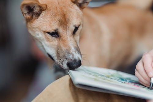 Ein Brauner, Kurzhaariger Hund