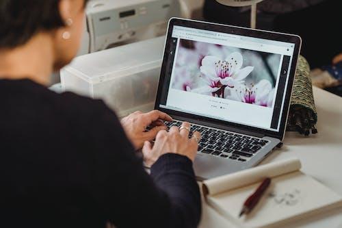 คลังภาพถ่ายฟรี ของ ค้นหา, ดอกไม้, ดิจิทัลโนแมด