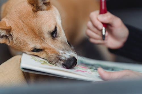 Kostenloses Stock Foto zu haustier, hund, hündisch