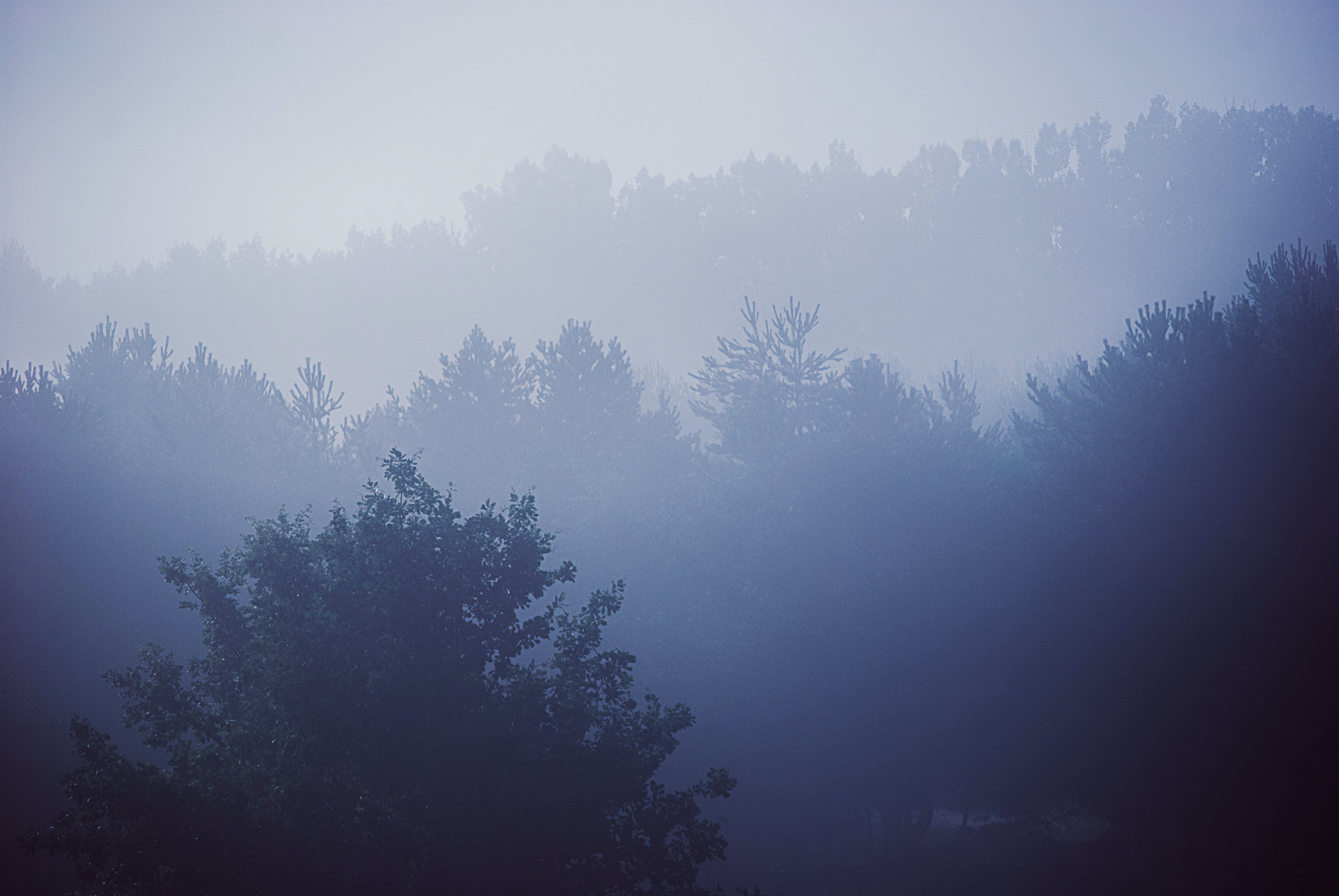 Free stock photo of trees, fog, woods