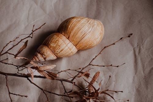 Two Garlic Bulbs on White Textile