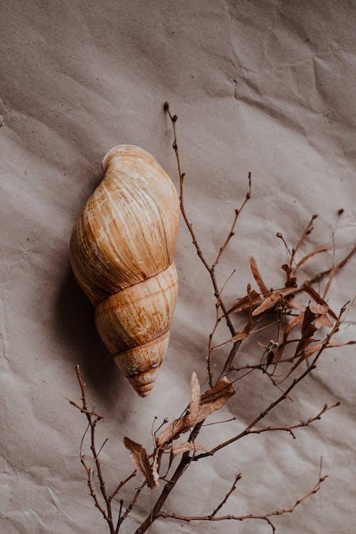 Brown and White Garlic on White Textile