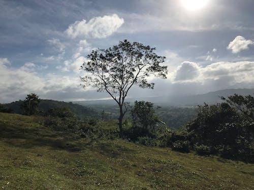 Photos gratuites de arbre, ciel, montagne