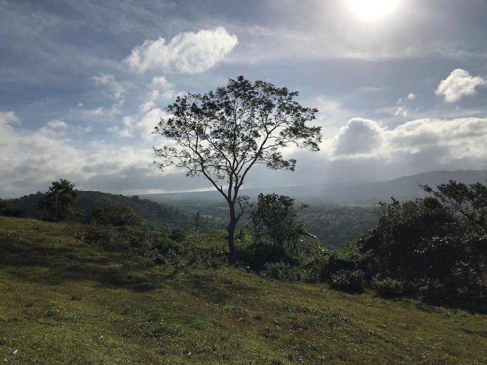 คลังภาพถ่ายฟรี ของ ต้นไม้, ท้องฟ้า, ธรรมชาติ