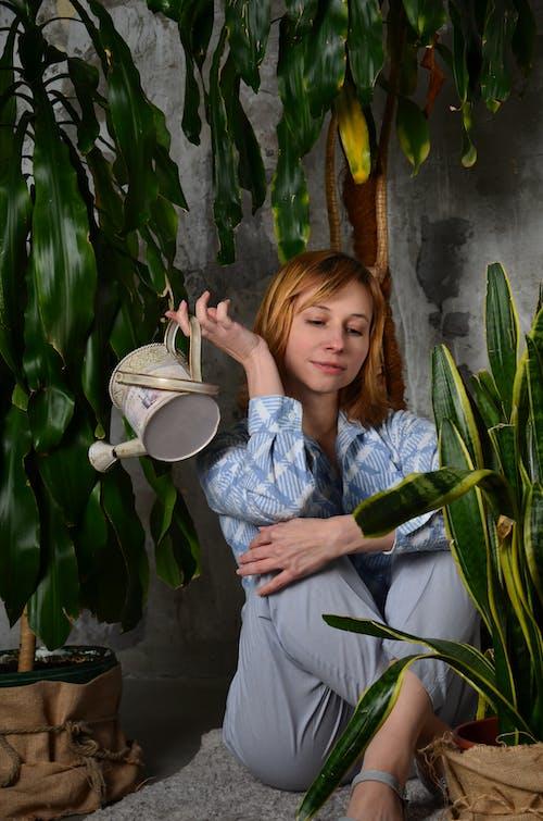 Gratis stockfoto met blad, bloem, bloempot