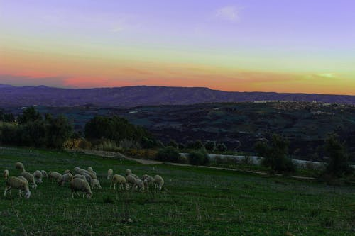 Free stock photo of blue sky, mountain, sheep