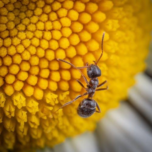 Foto stok gratis bunga, makro, semut
