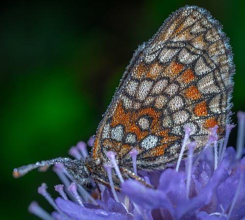 Foto stok gratis kupu-kupu, makro, serangga