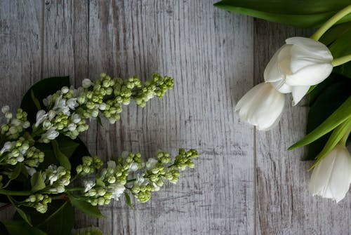 From above of fresh aromatic tulips and branches of white lilac placed on wooden table in daytime
