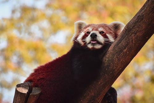 Free stock photo of animal, cute, daylight