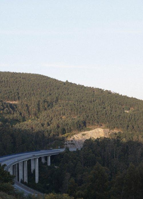 パーク, ブリッジ, 丘の無料の写真素材