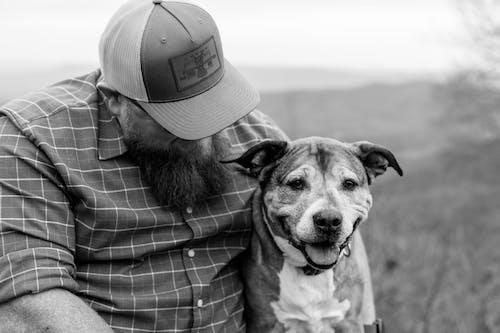 Gratis arkivbilde med dyr, hund, kjæledyr
