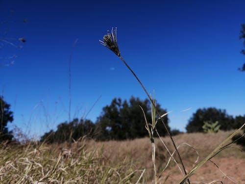 Photos gratuites de belle nature, flore, printemps