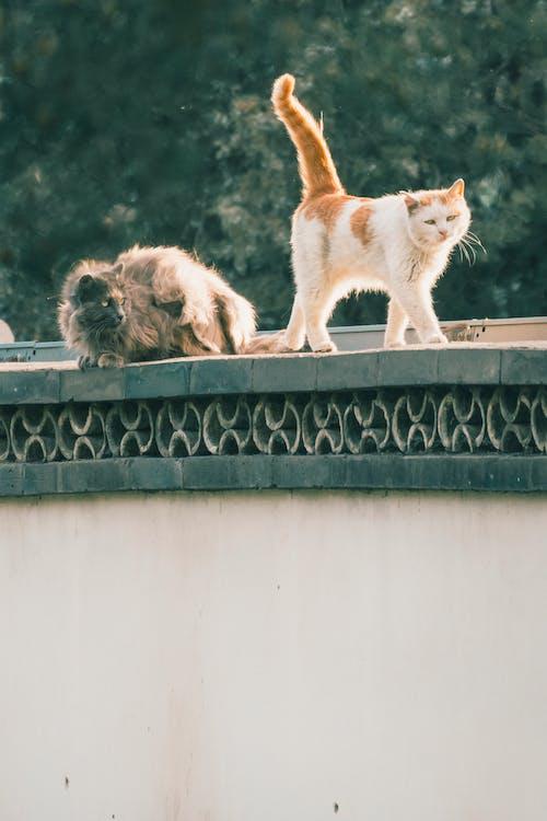 White and Orange Cat on Black Concrete Fence