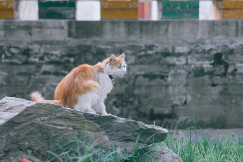 Orange and White Cat on Gray Rock