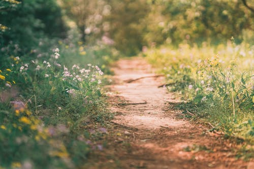 Brown Dirt Road Between Green Grass