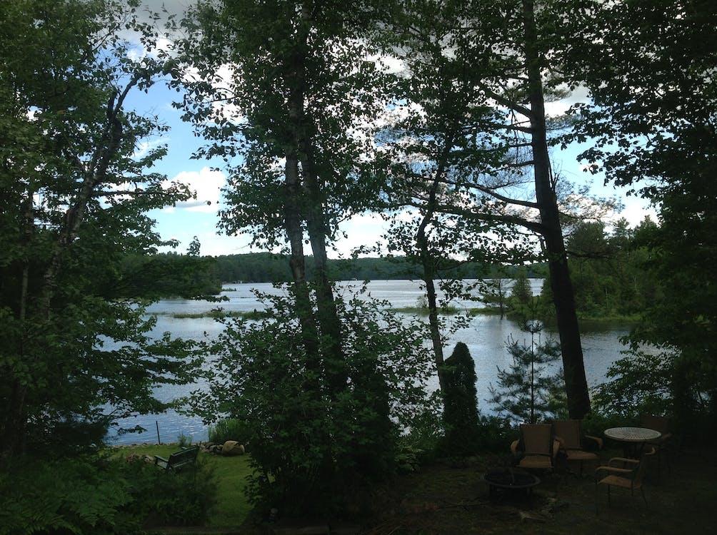 Free stock photo of river scene