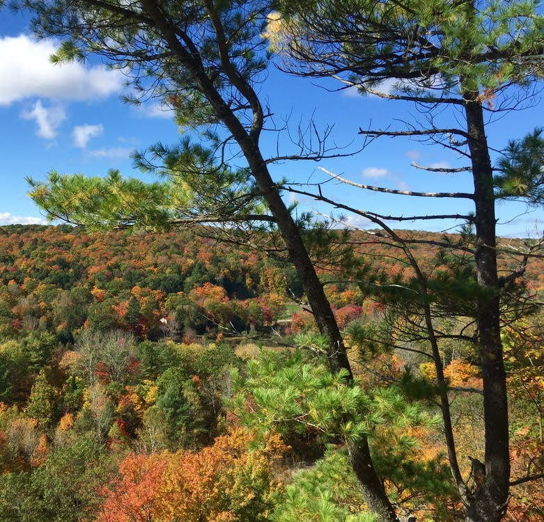 Free stock photo of fall foliage, haliburton highlands, ontario