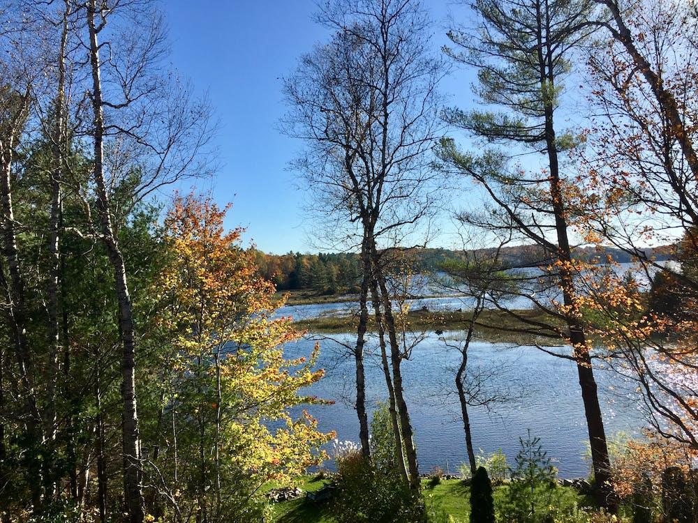 秋天的落葉 的 免费素材图片