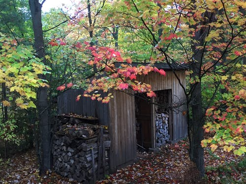Free stock photo of fall leaves, Woodshed chopped wood