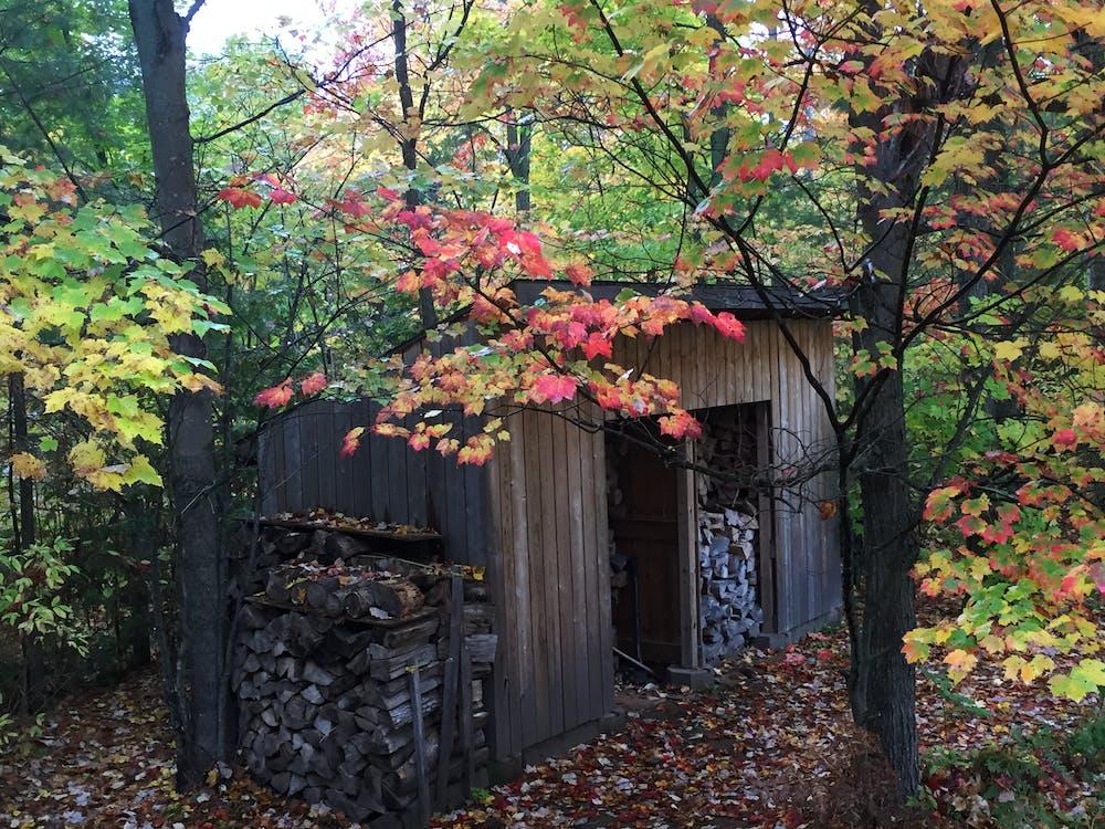 木棚切碎的木头, 落葉 的 免费素材图片