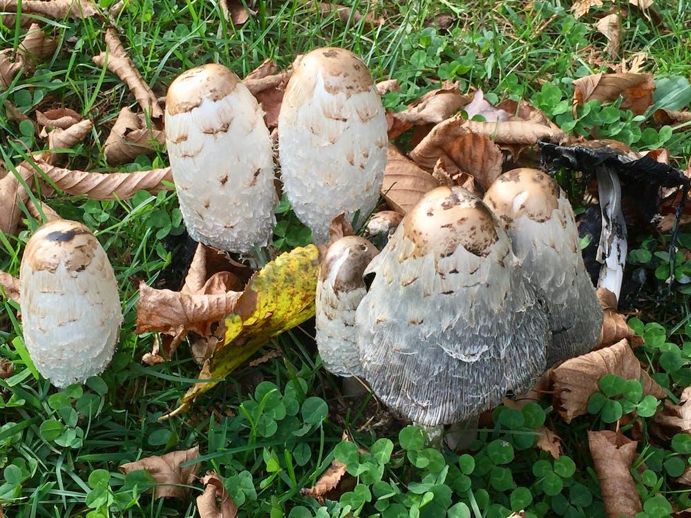 Free stock photo of mushrooms, wild mushrooms