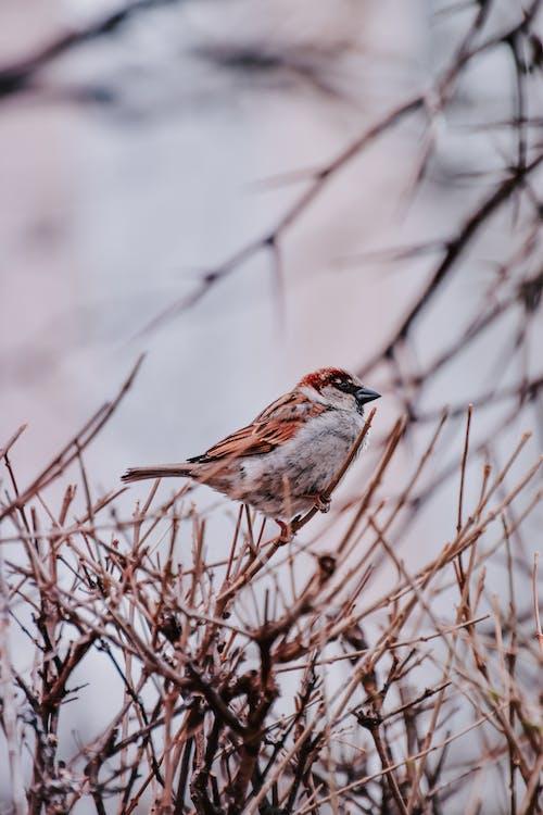 Imagine de stoc gratuită din animal, arbore, birdwatching