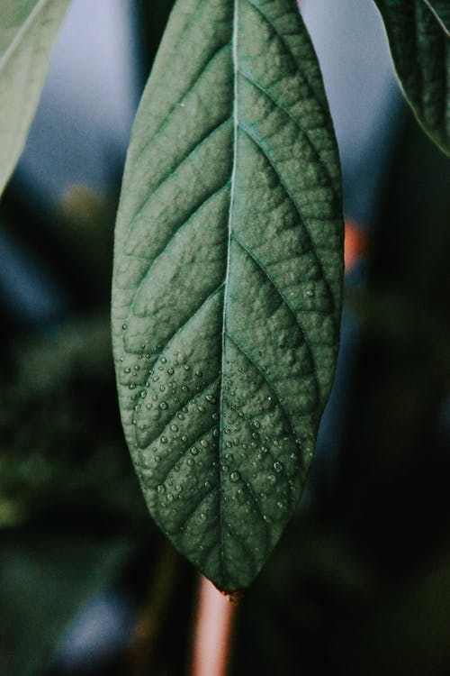 Ilmainen kuvapankkikuva tunnisteilla biologia, kaste, kasvikunta