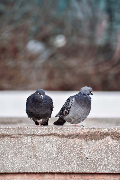 Ilmainen kuvapankkikuva tunnisteilla eläin, flunssa, harmaa