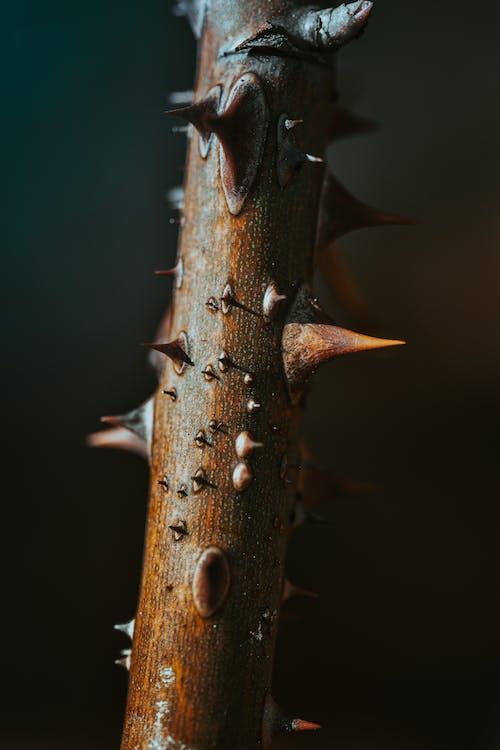 Ilmainen kuvapankkikuva tunnisteilla haukkuminen, hyönteinen, kaarna