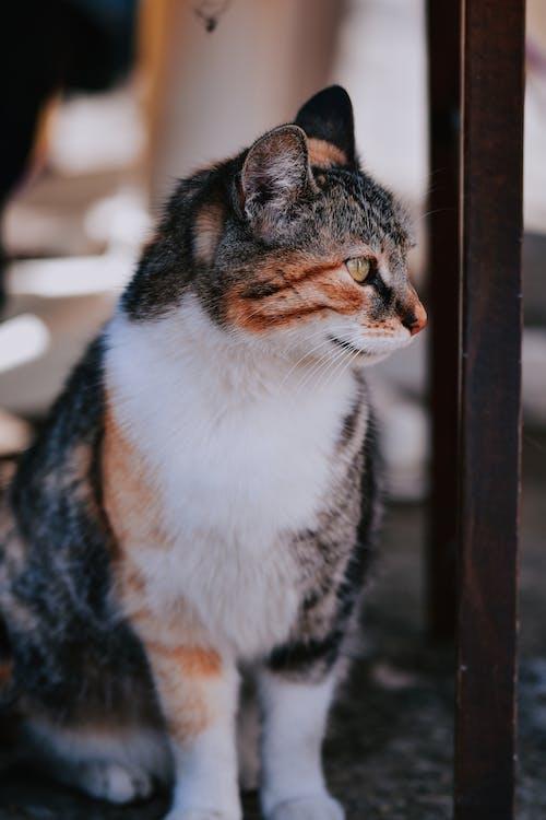Imagine de stoc gratuită din adorabil, amestecat, animal