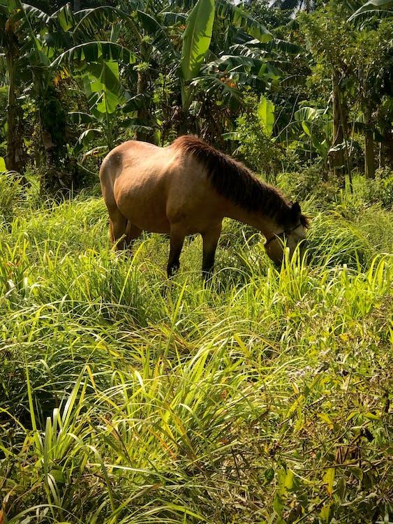 Fotobanka sbezplatnými fotkami na tému chov koní, chov zvierat, farma