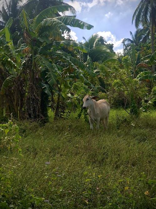 Photos gratuites de animal de ferme, animal de la ferme, animaux de ferme
