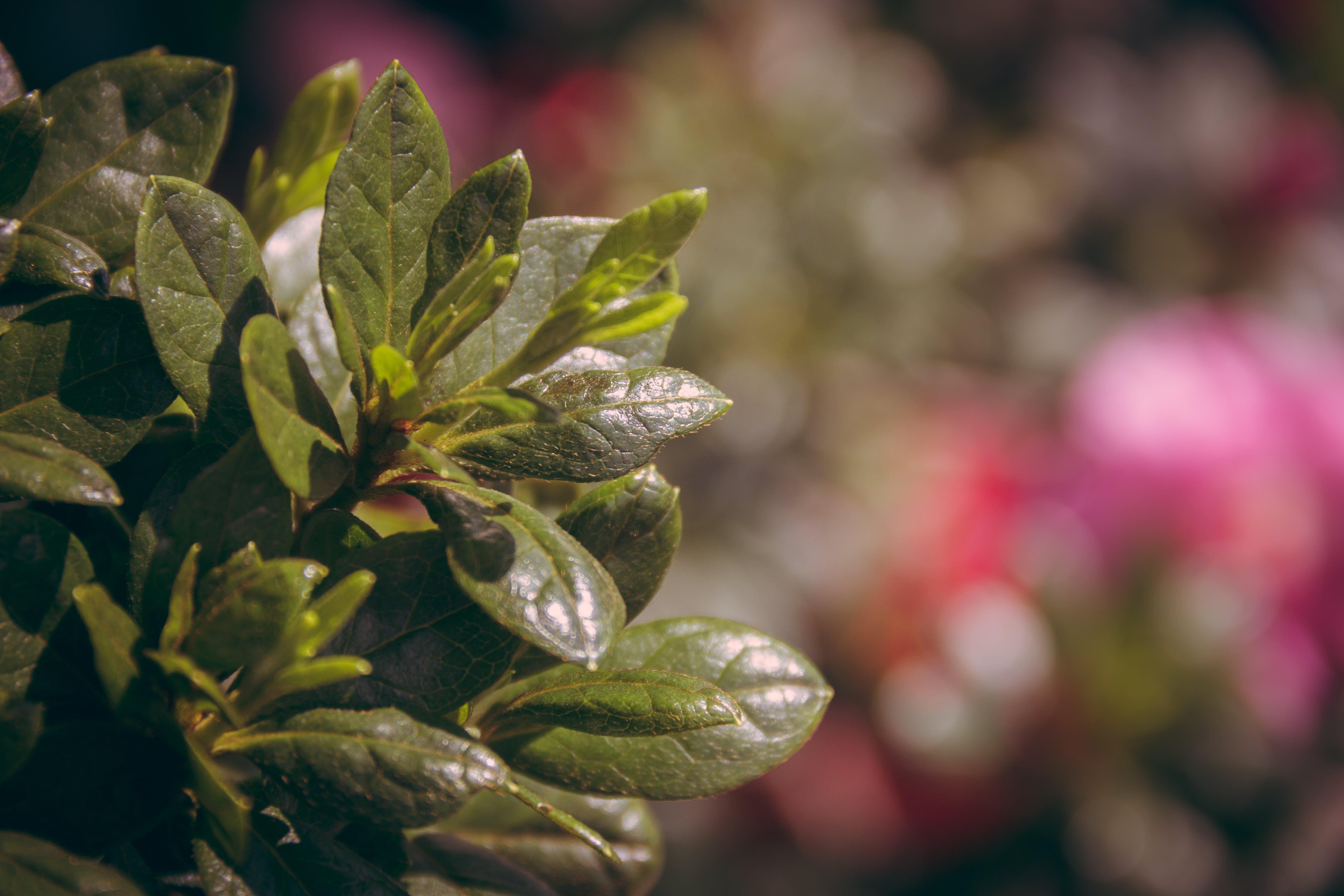 Kostenloses Stock Foto zu flora, fokus, garten, nahansicht
