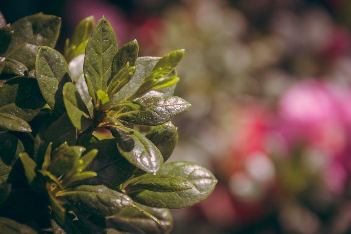 concentrarsi, crescita, flora