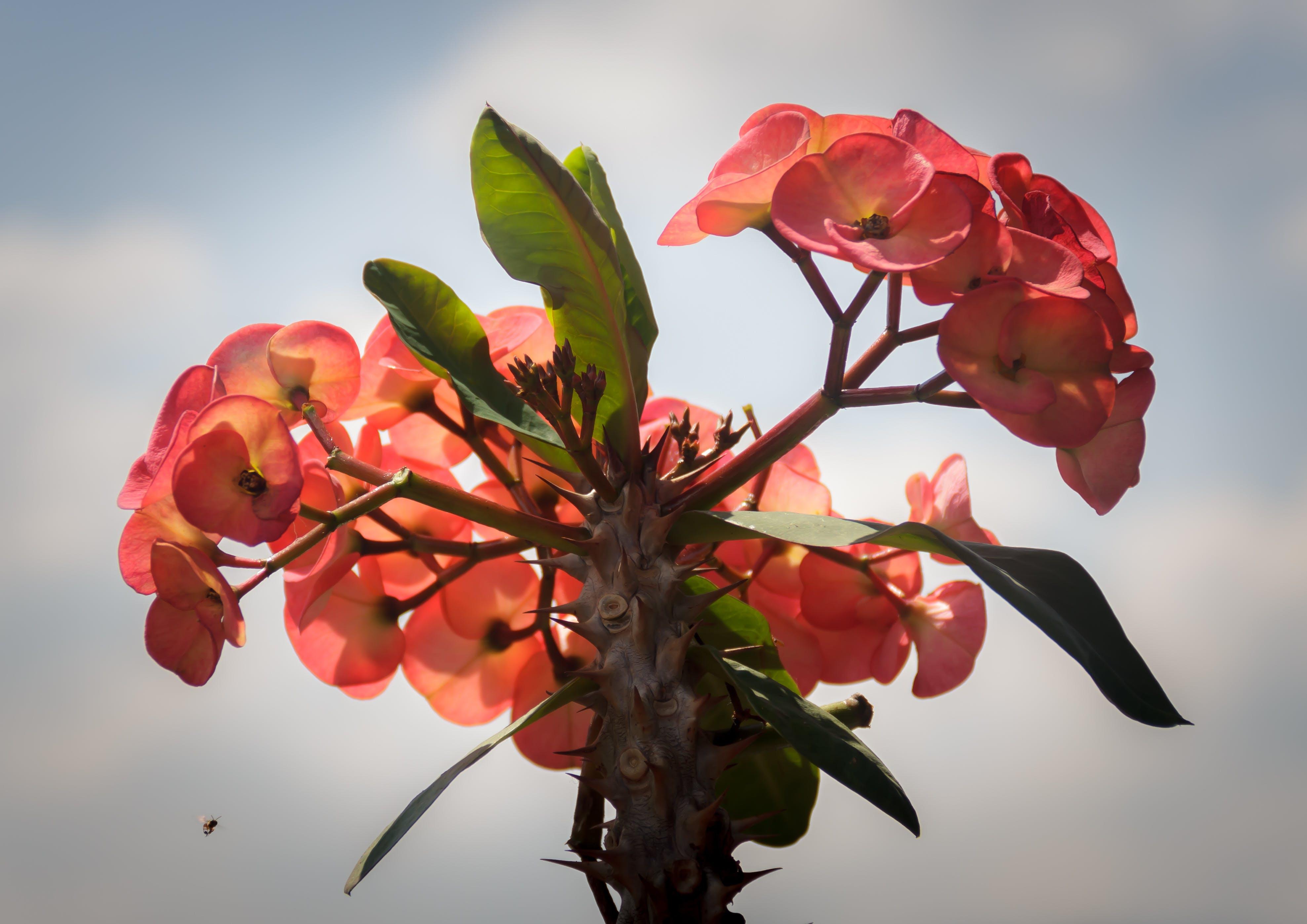 Close-up Photography of Euphorbia