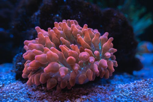 Brown Coral Reef in Close Up Photography