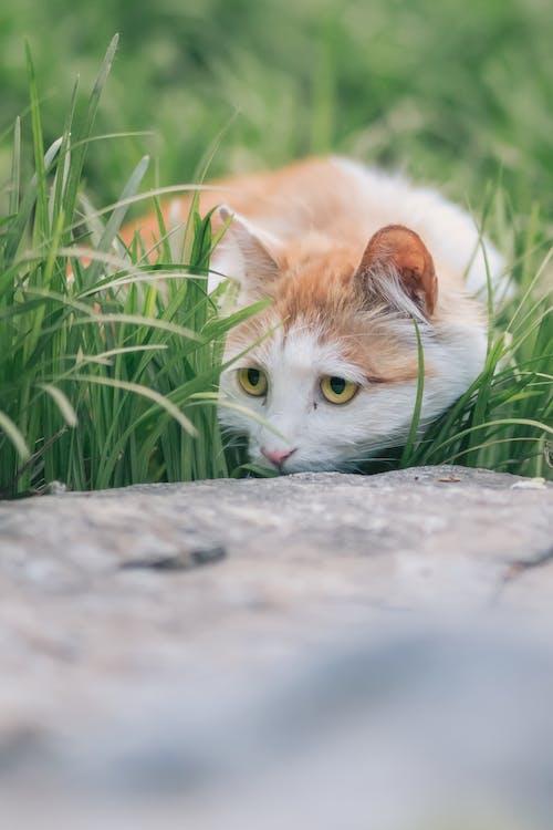 Orange and White Cat on Gray Concrete Floor