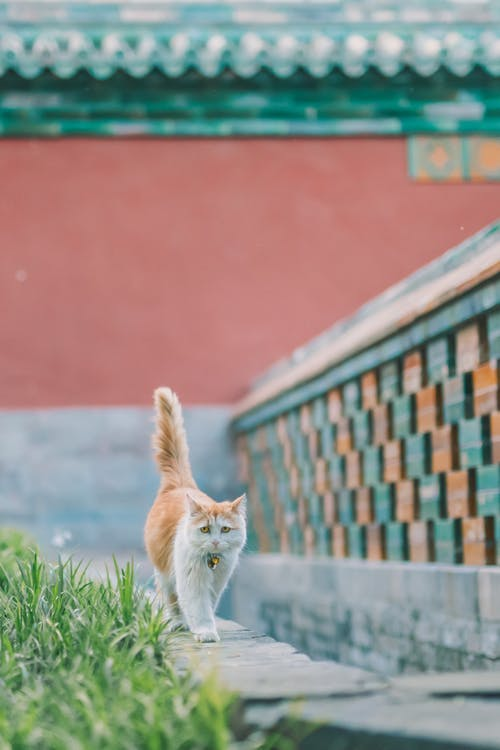 Orange Tabby Cat on Green Grass