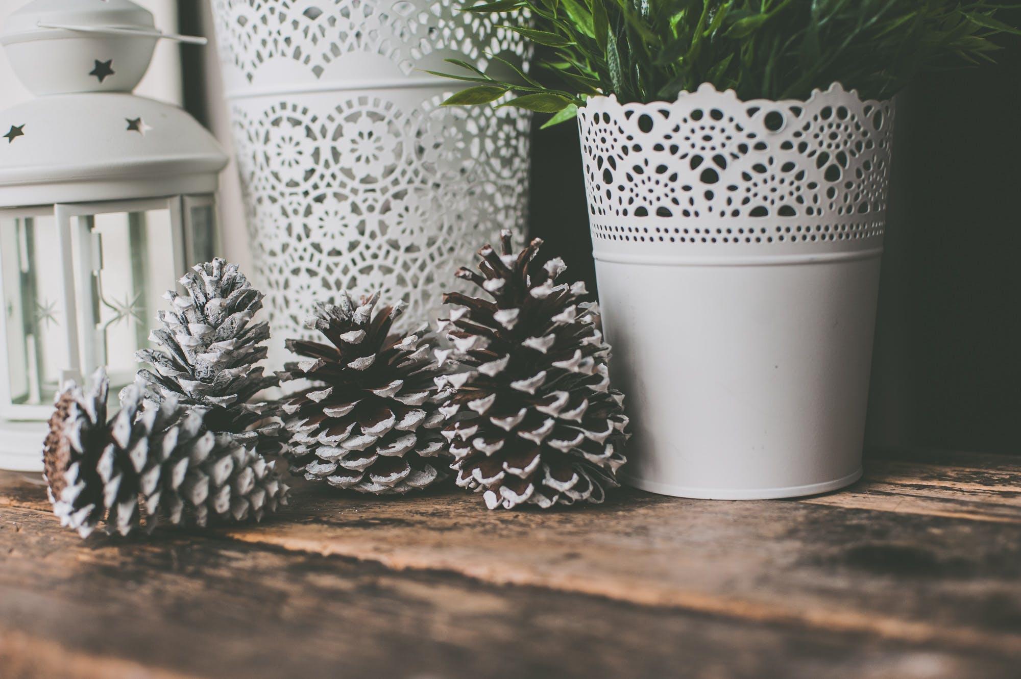 Photo of Pine Cones Near White Vase
