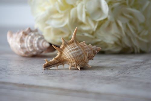 Seashells placed on table against hydrangea flower