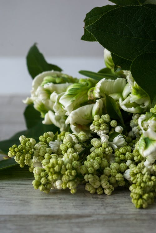 Branch of white lilac and Super Parrot tulips placed on table