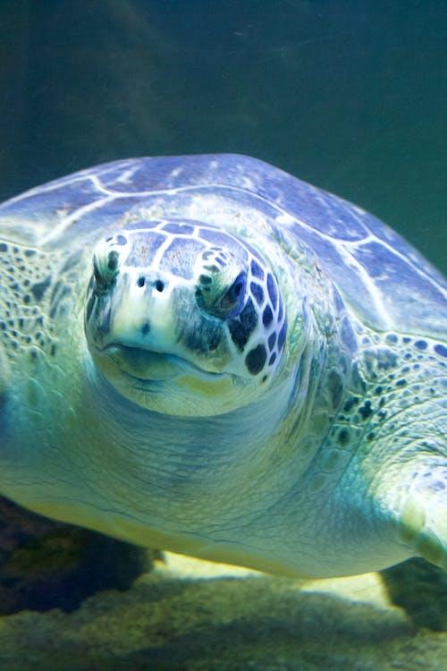 Free stock photo of turtle