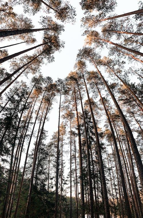 Darmowe zdjęcie z galerii z bagażnik, drewno, drzewo