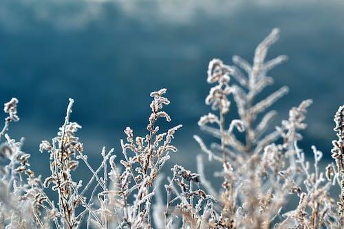 Darmowe zdjęcie z galerii z lód, makro, mróz, mroźny