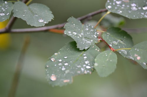 Doğa Ana, su damlası içeren Ücretsiz stok fotoğraf