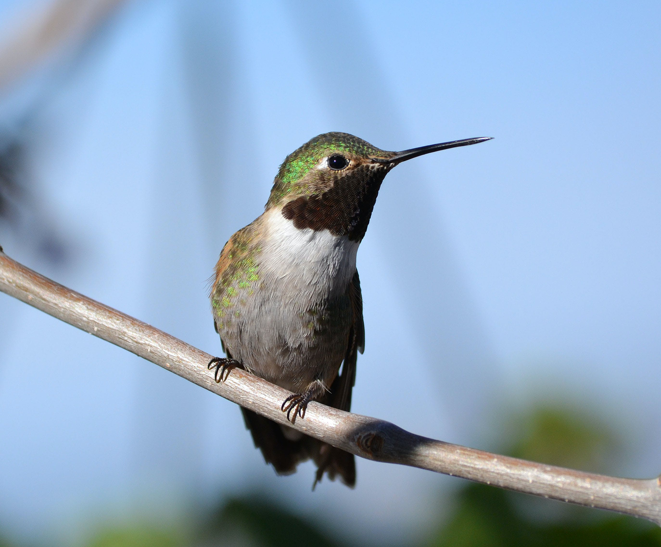 Shallow Focus Photography of Gray and Green Bird on Branch