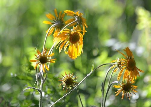 Doğa Ana, güzel çiçekler, sarı çiçek içeren Ücretsiz stok fotoğraf