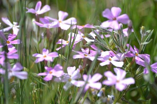 Doğa Ana, güzel çiçekler, pembe çiçekler içeren Ücretsiz stok fotoğraf