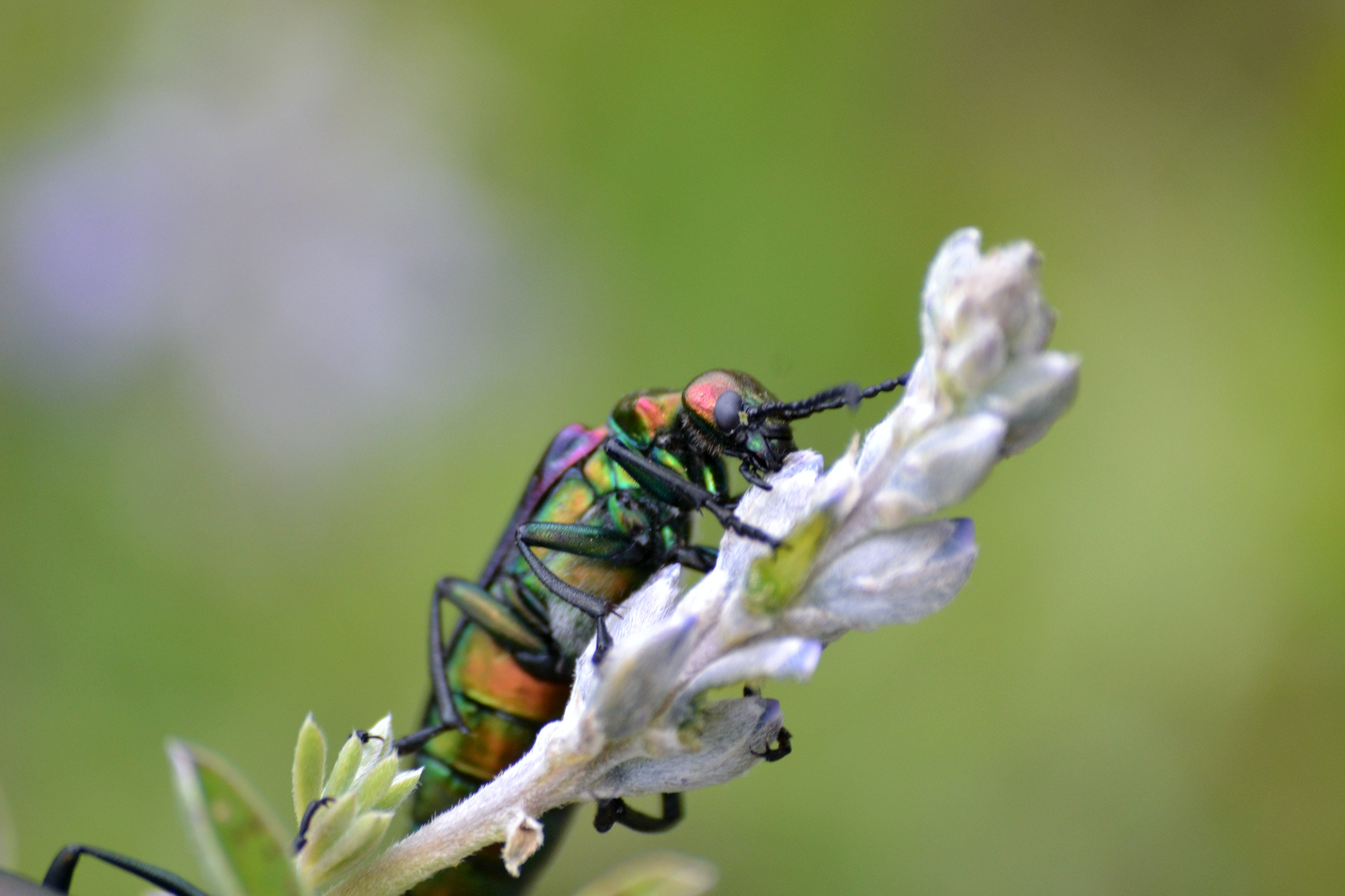 Free stock photo of colorful, insects, mother nature, purple flowers